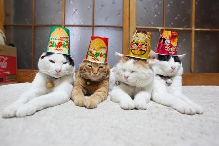 Новогодний корпоратив: Кошачья вечеринка